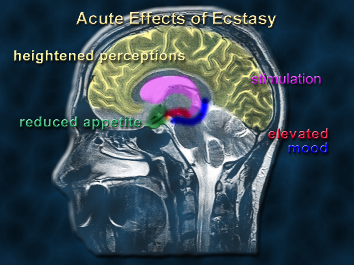 Ecstasy - acute effects