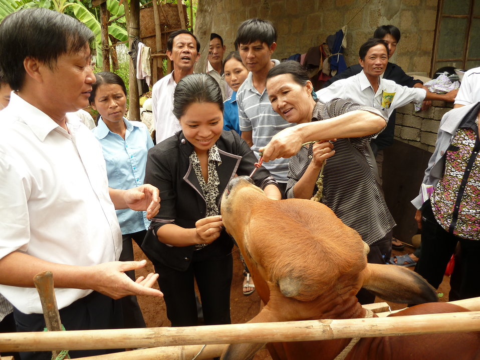 Animal health worker training in Quang Tri Province