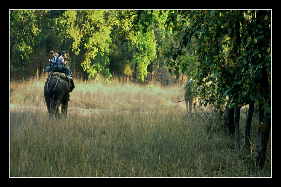 Uploaded by request of Deba Prasad Roy  Taken in 'Bandhavgararh Resurve Forest' in the State of Madhya Pradesh in India  Visitors from a