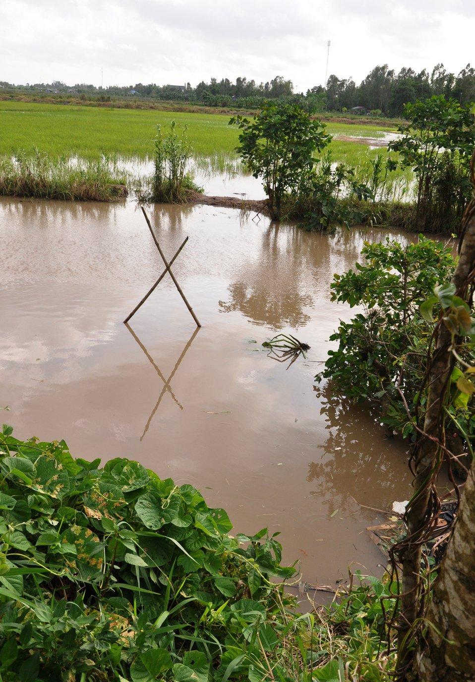 Scenic Mekong Delta in Vietnam