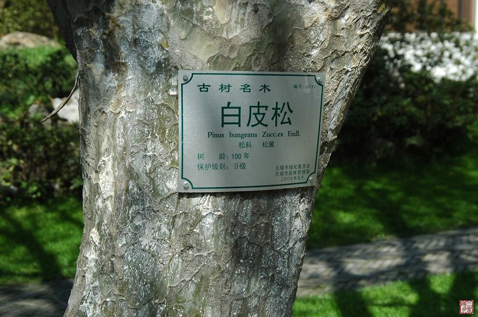 Uploaded by request of Ju Chen   One hundred years old tree.  This old trees is protected by the Wuxi government.