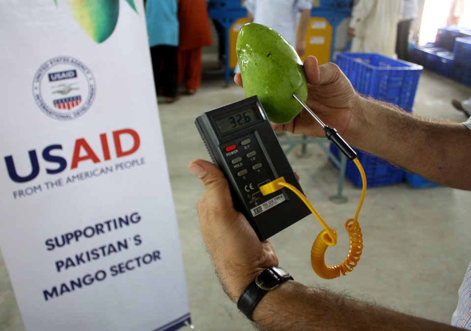 USAID helps Pakistan's mangoes reach new export markets - 1