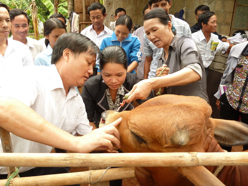 Animal health worker Tran Thi Hong Thuy, center, receives training in Quang Tri Province.