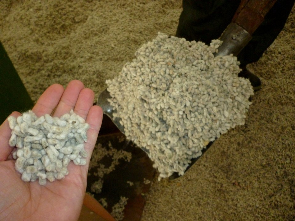 A useful byproduct of producing cotton is the cottonseed itself, which can be used as animal feed or pressed into cooking oil, as these seeds are about to be at a cottonseed oil factory in Mazar.  The owner has expanded his business with a loan he receive