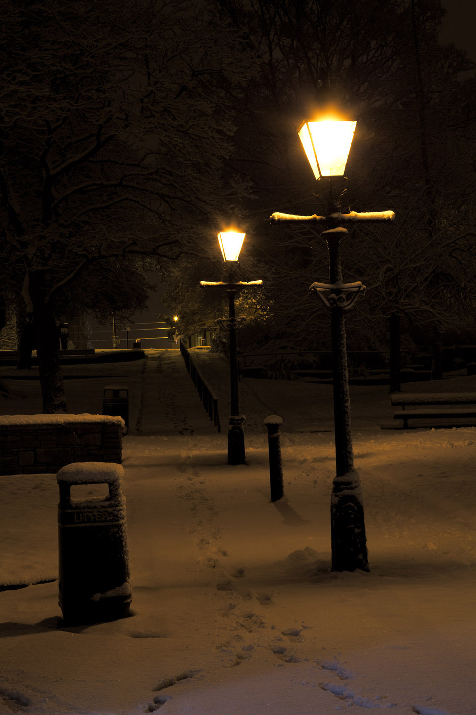 Park at night in winter