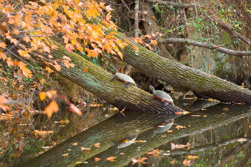 CandO Canal, Washington, DC. 2007 Along the Potomac River, Chesapeake Bay watershed. USEPA photo by Eric Vance
