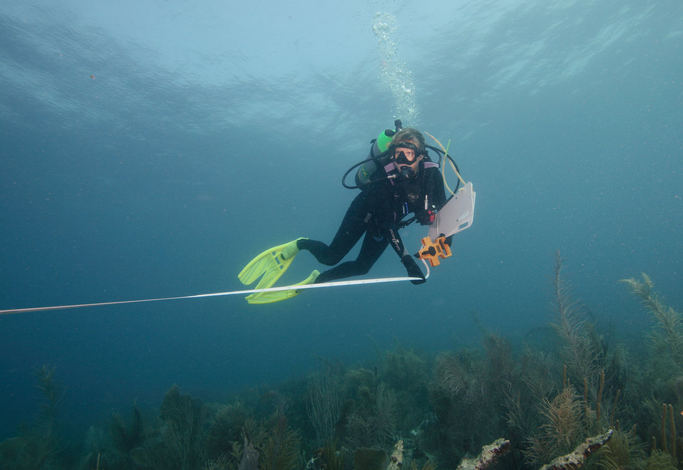 Measuring Reef Structure in Puerto Rico