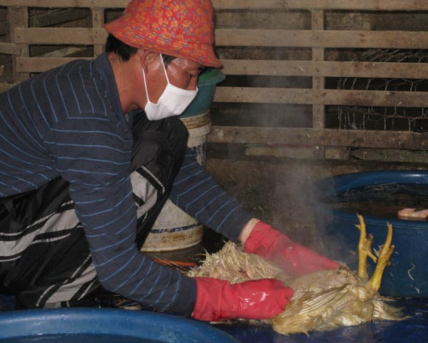 USAID helps poultry farmers and veterinarians combat avian and pandemic influenza.