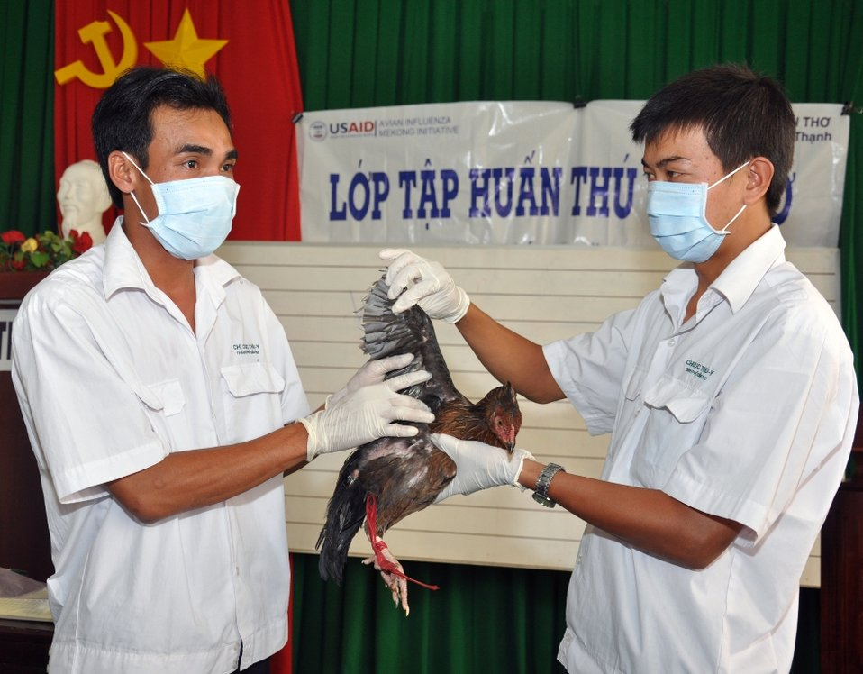 USAID helps combat avian and pandemic influenza