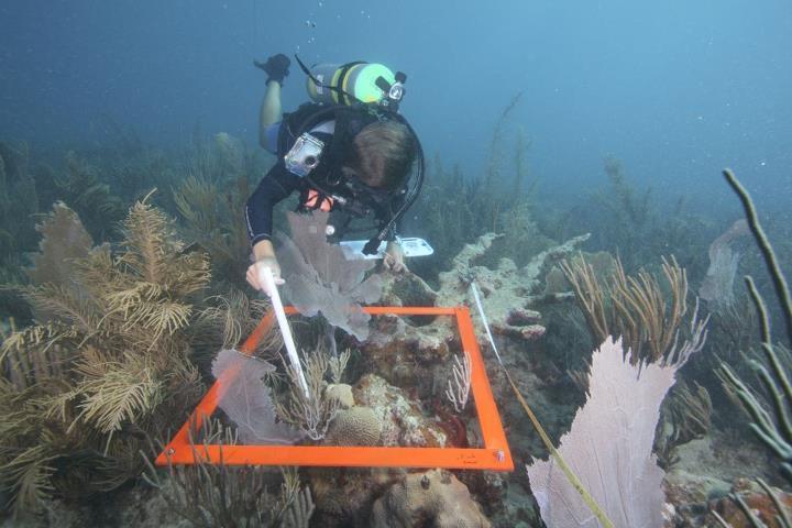 Coral reef survey off coast of Puerto Rico