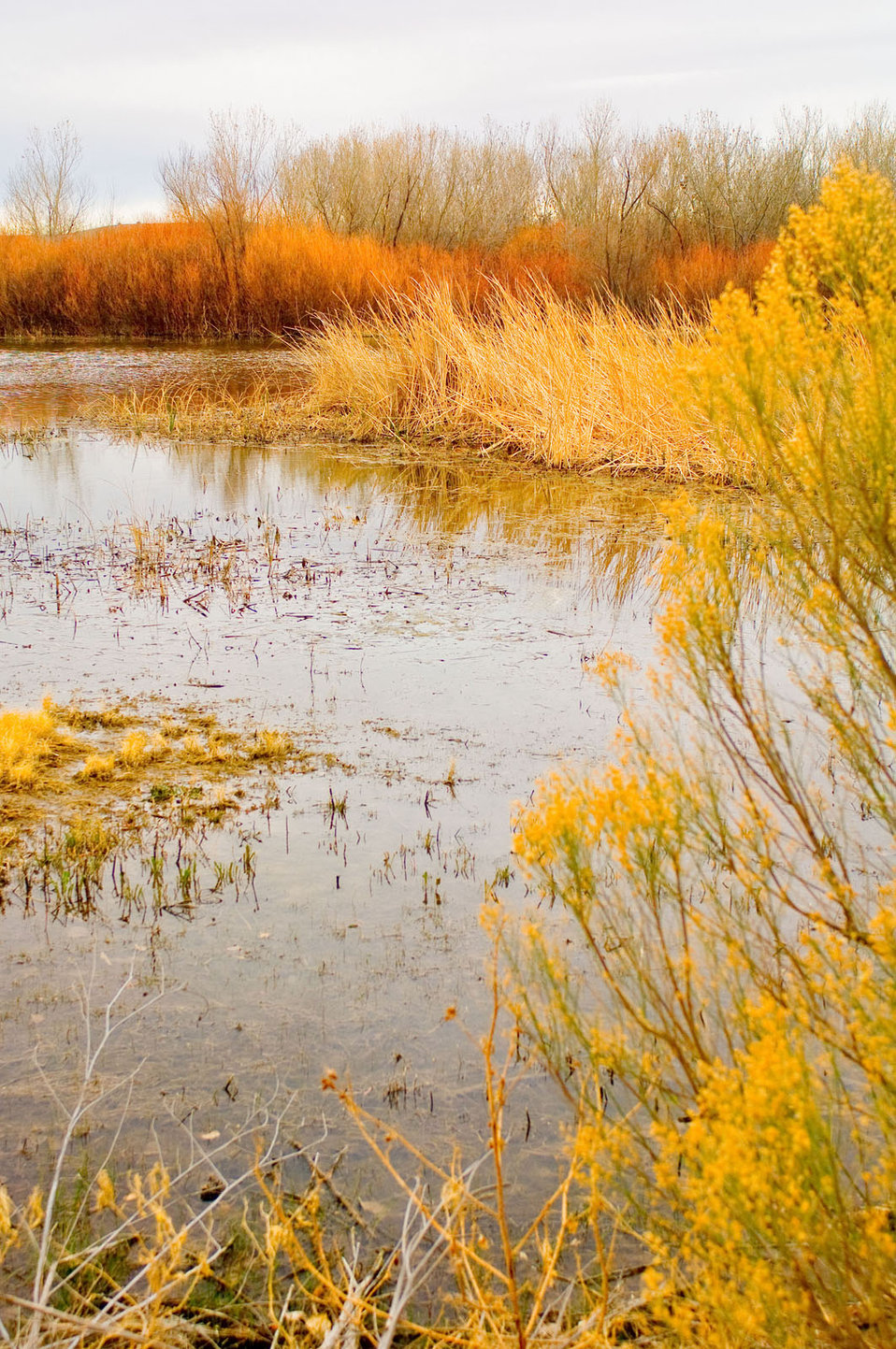There are many types of wetlands