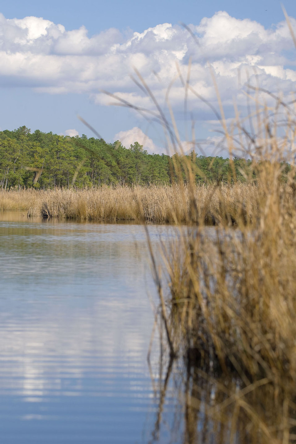 Wetlands Help Recharge Groundwater