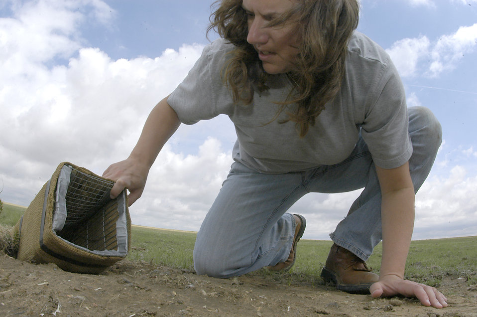 Schriever AFB home to rare burrowing owls