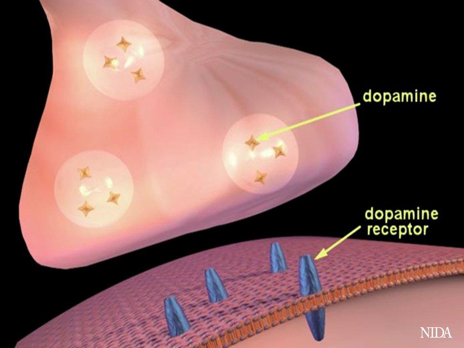 Dopamine Uptake