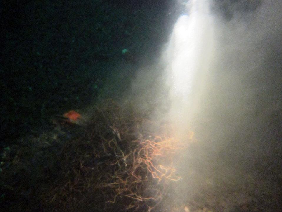 February 6, 2013 A murky scene of abandoned fishing nets, Puget Sound