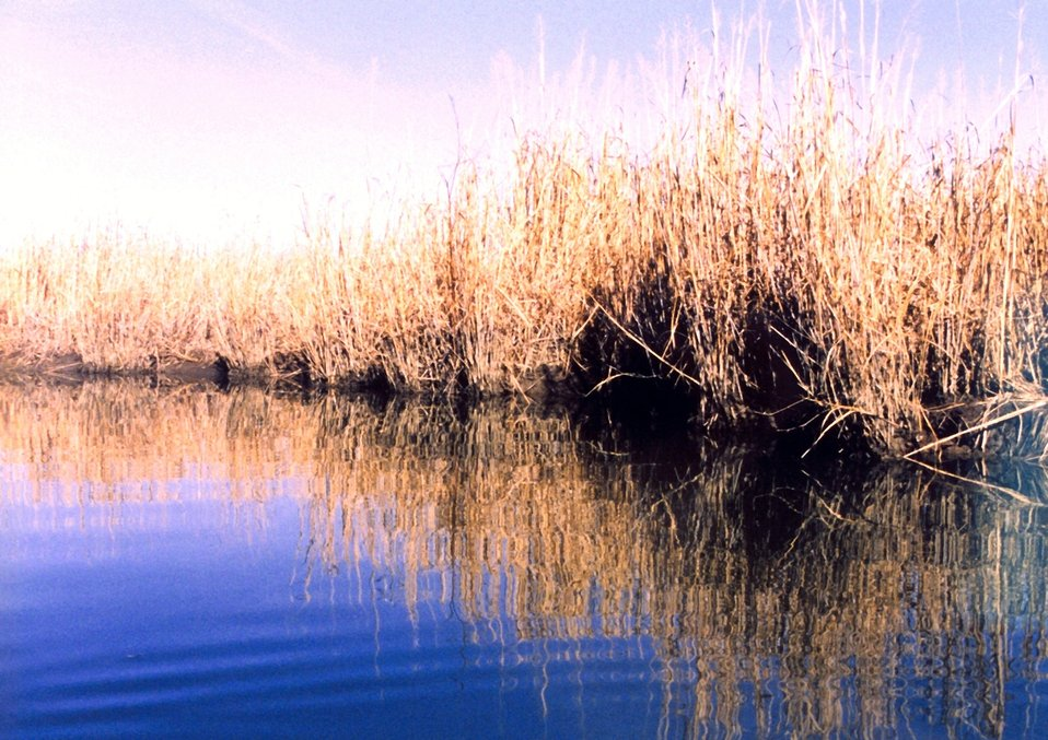 Reflections of a Patuxent River marsh.