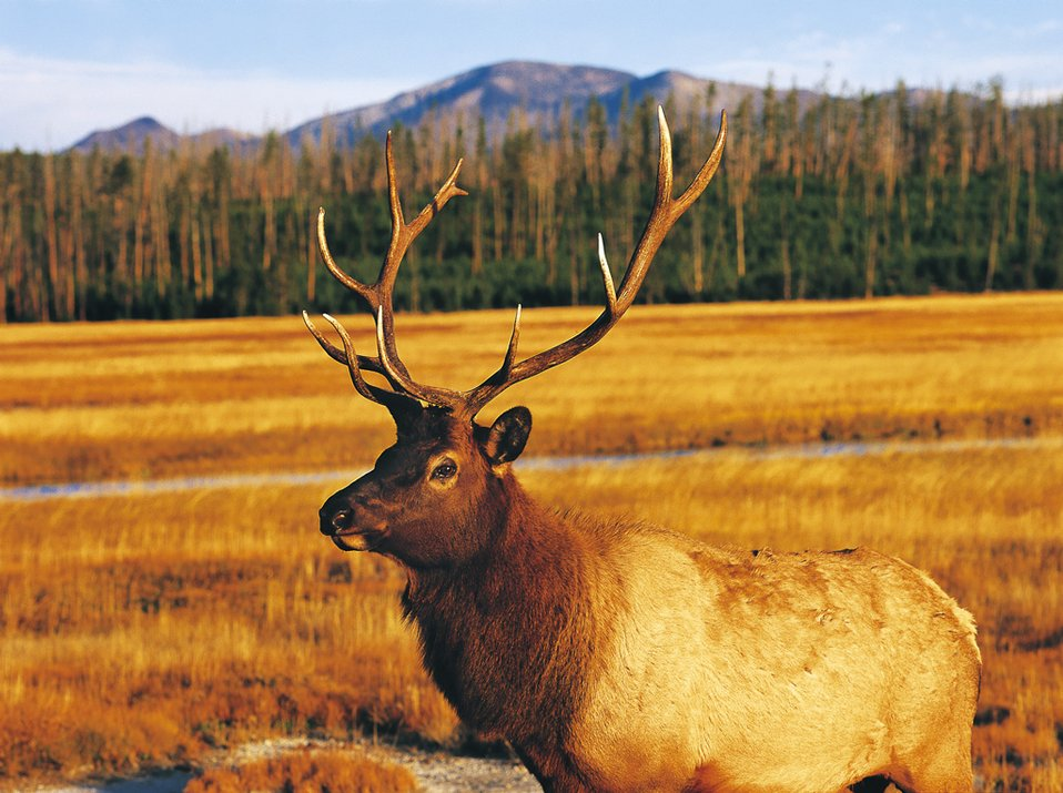 Uploaded by request of Tao Shi