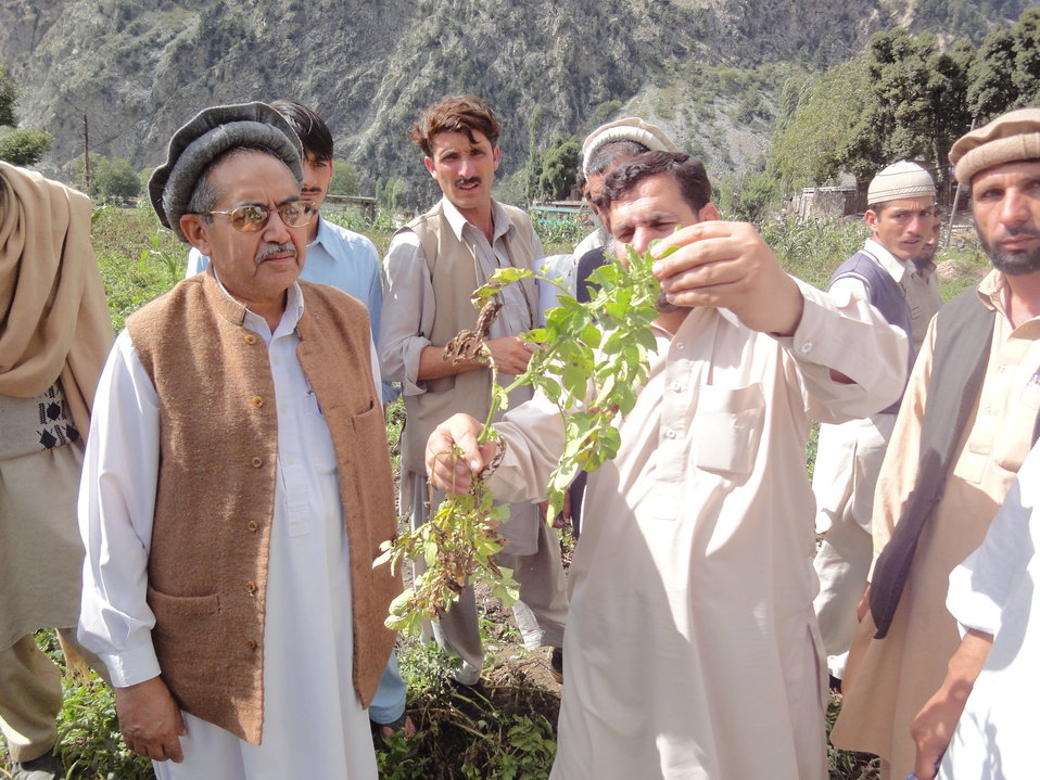 USAID Supports Potato Farmers from Swat - 4