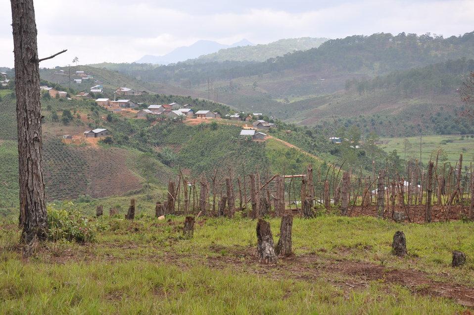 Forests in Vietnam