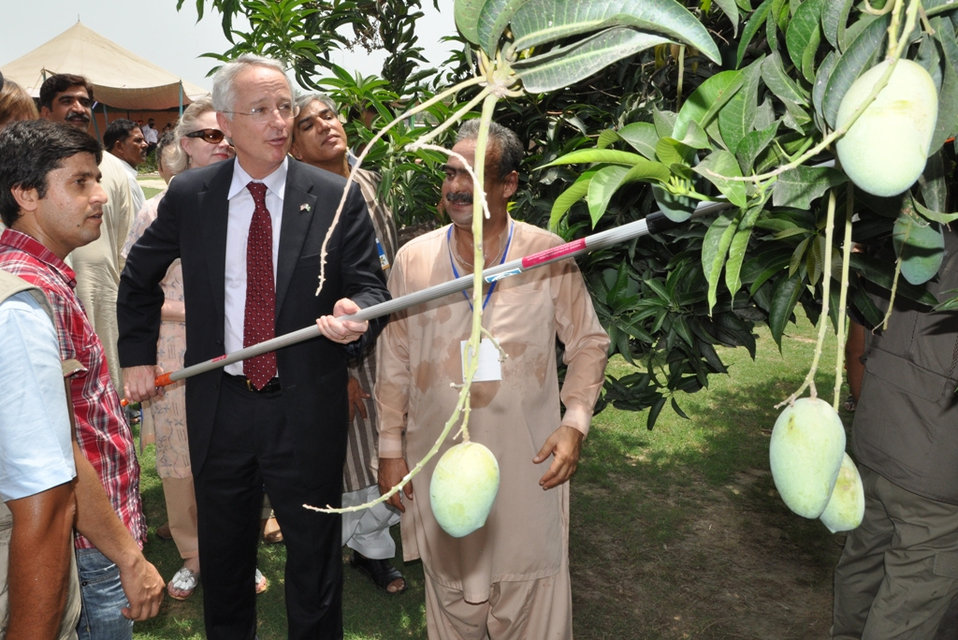 U.S. Helps Pakistani Farmers Export Mangos