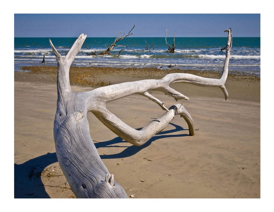 Driftwood on the beach, Louisiana