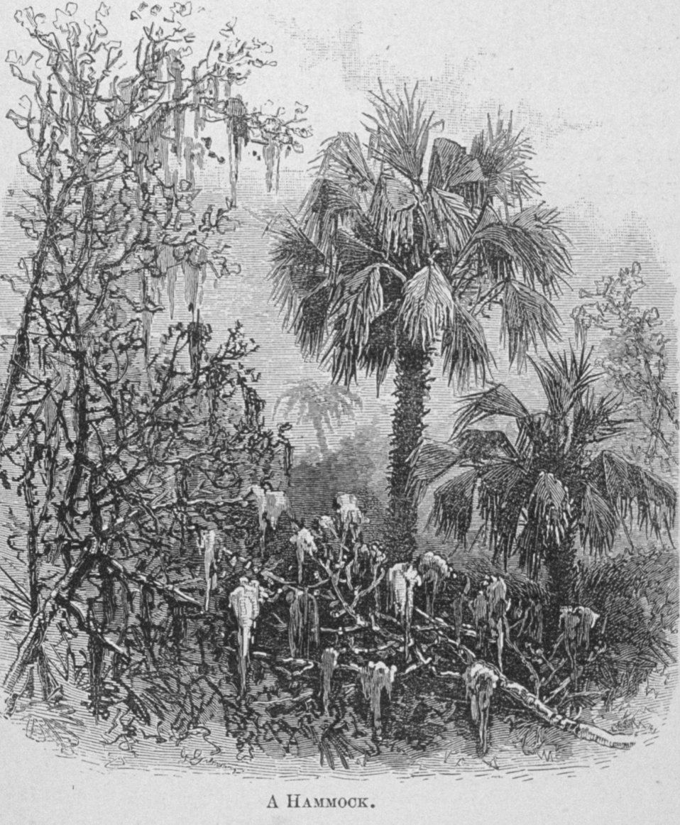 A Hammock - in 'Florida for Tourists, Invalids, and Settlers' by  George M. Barbour, 1881.  Library Call No. F316 .B23 1881. A hammock is a relatively high, dry area with fertile soil.
