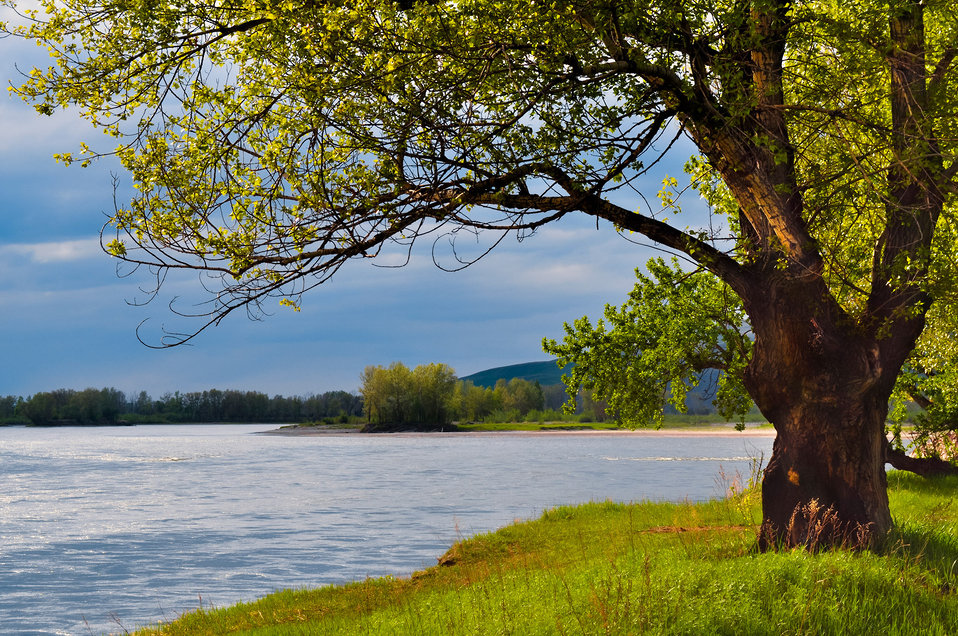 The tree on the bank