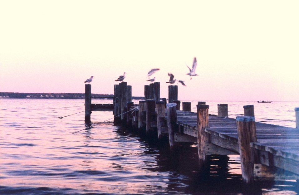 Gulls on a pier at sunset.