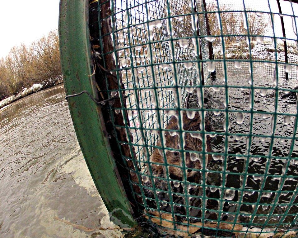 Unintended bycatch
