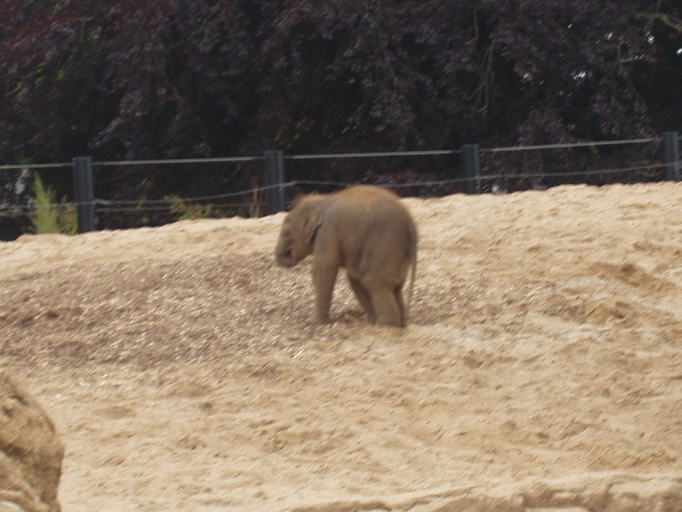 Baby elephant at Dublin Zoo.
