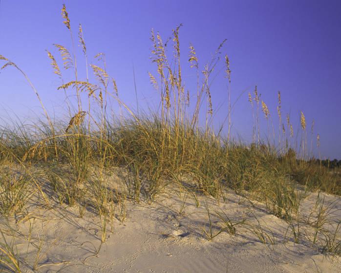 Alabama Sand Dune, USFWS