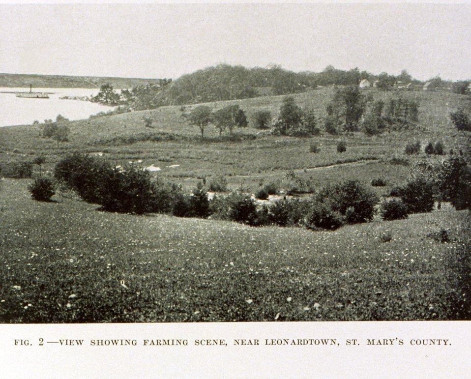 Farm scene near Leonardtown, St. Mary's County, along an arm of the Potomac.