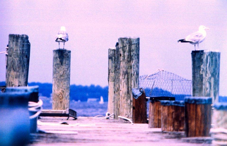 Gulls on a pier.