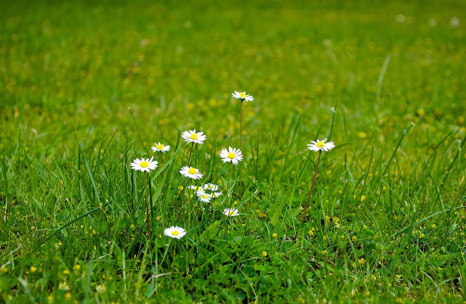 Flowers on the grass