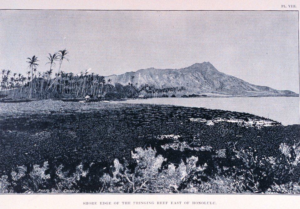 'Shore Edge of the Fringing Reef East of Honolulu', Plate VIII.  In: 'Coral Reefs of the Hawaiian Islands' by Alexander Agassiz.  April 1889. Bulletin of the Museum of Comparative Zoology, at Harvard College.  Vol. XVII. No. 3.  Library Call Number G