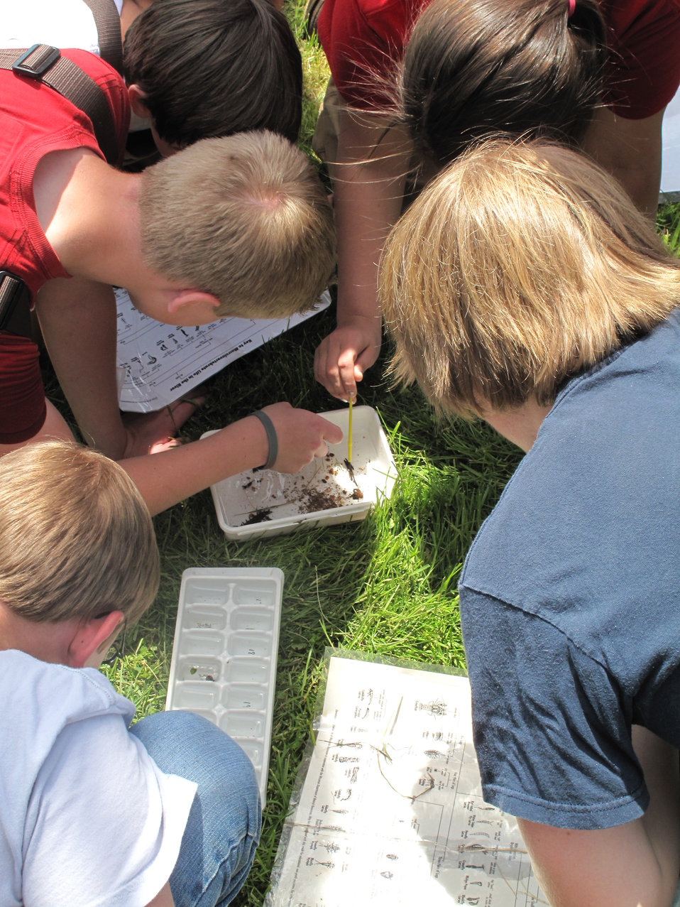 Students point out a caddisfly