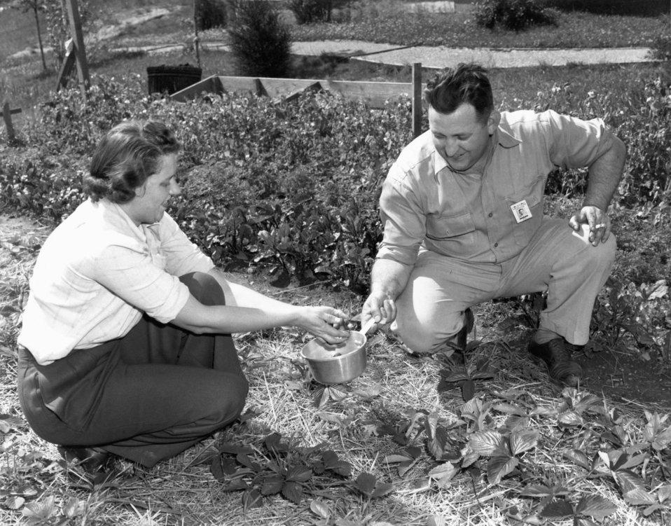 Victory Garden 1945 Oak Ridge