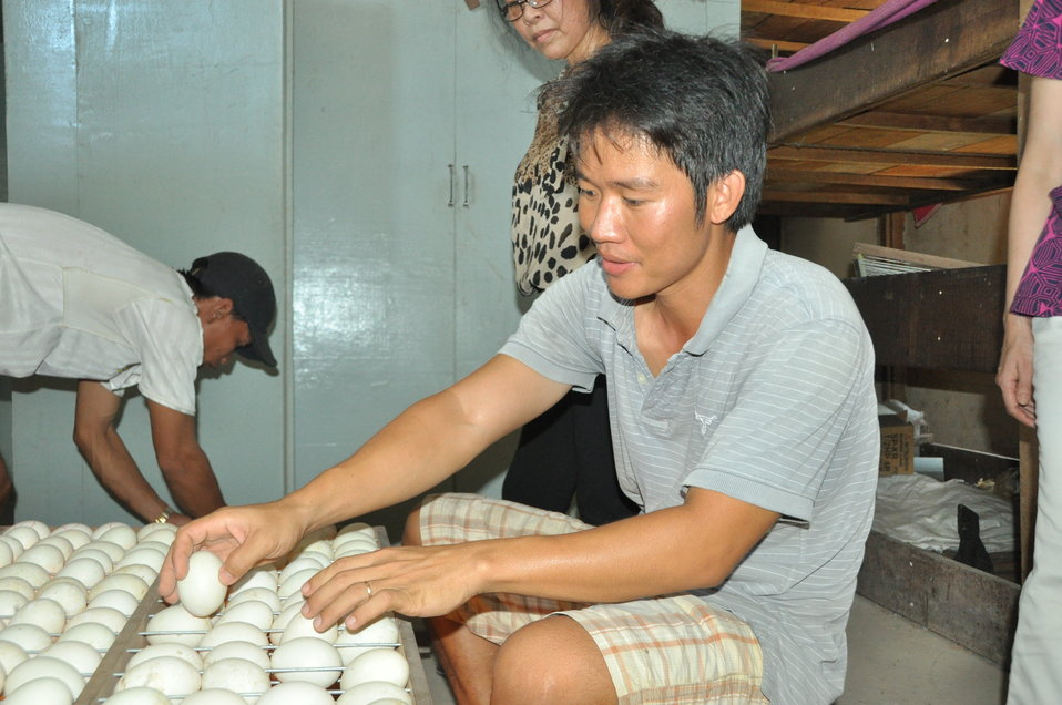 Mr. Thien inspects egg at his duck hatchery in Can Tho