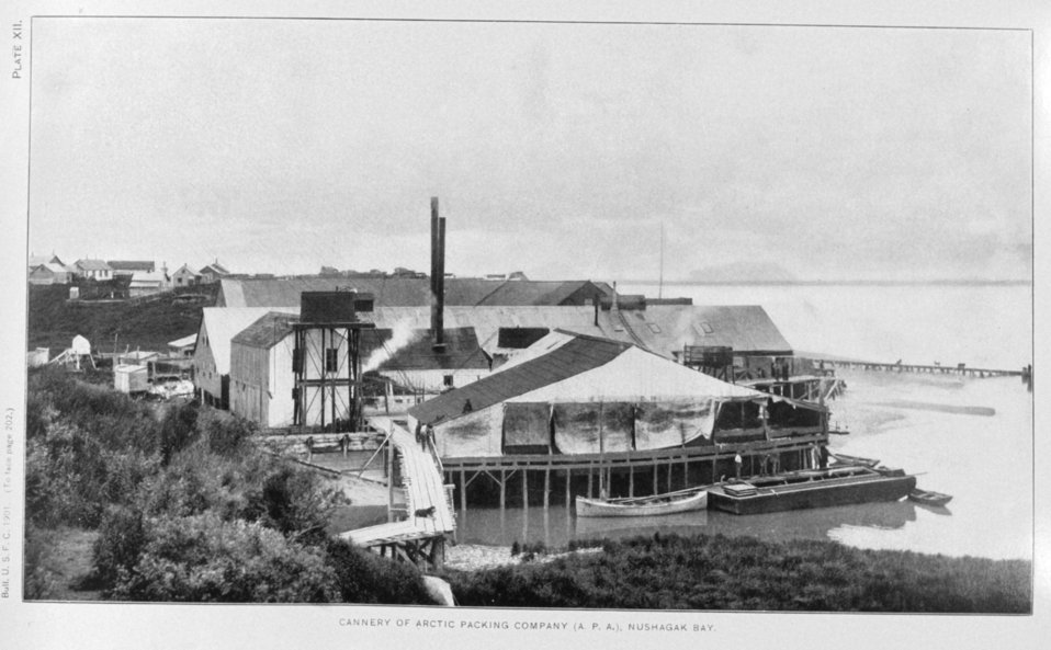 Cannery of Arctic Packing Company (A. P. A.), Nushagak Bay.  In: 'Alaska Salmon Investigations,' by Jefferson F. Moser, p. 202, 1902.  Washington , Government Printing Office.  Library Call No. G945 M98.