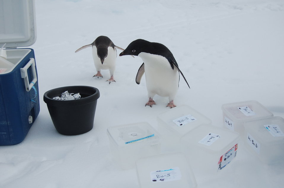 Photo of the Week: Penguins, Plankton, and Argonne's Advanced Photon Source