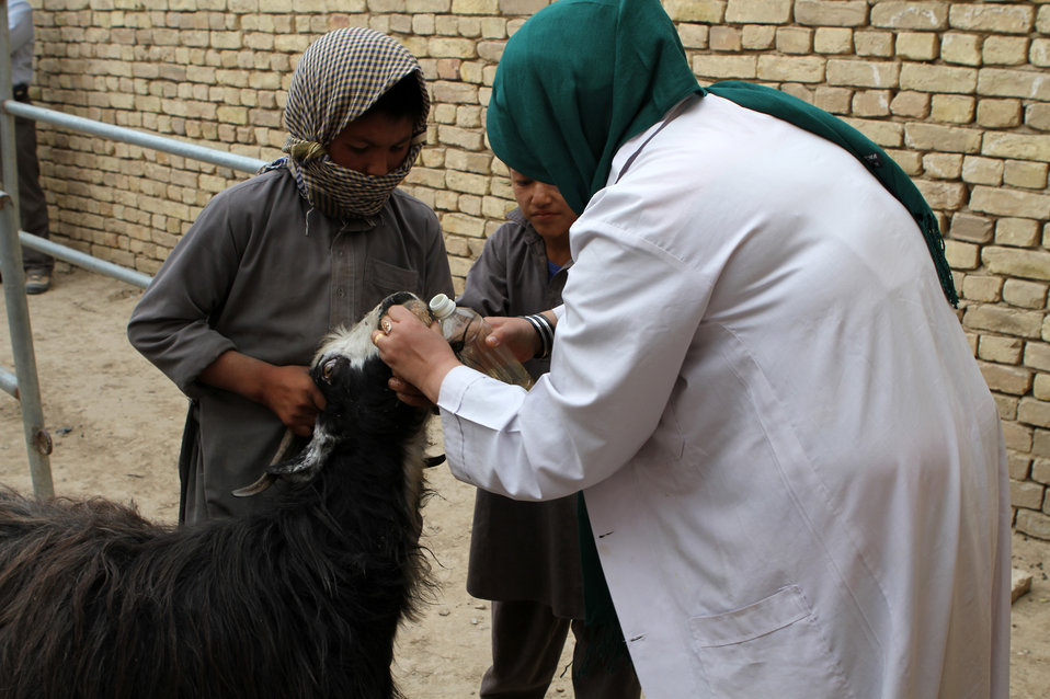 USAID funded Development of Veterinary Field Units