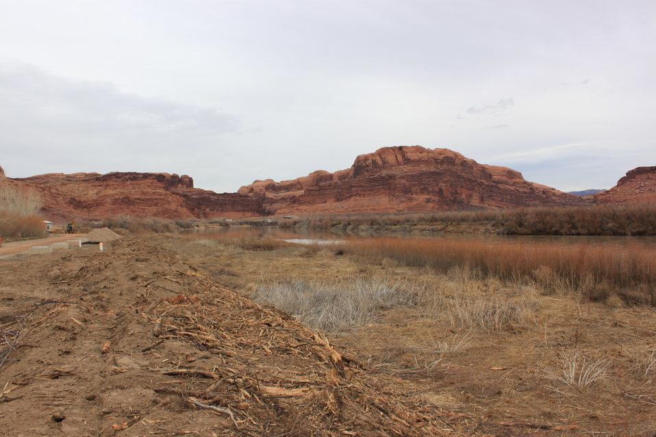 Moab Tamarisk Removal