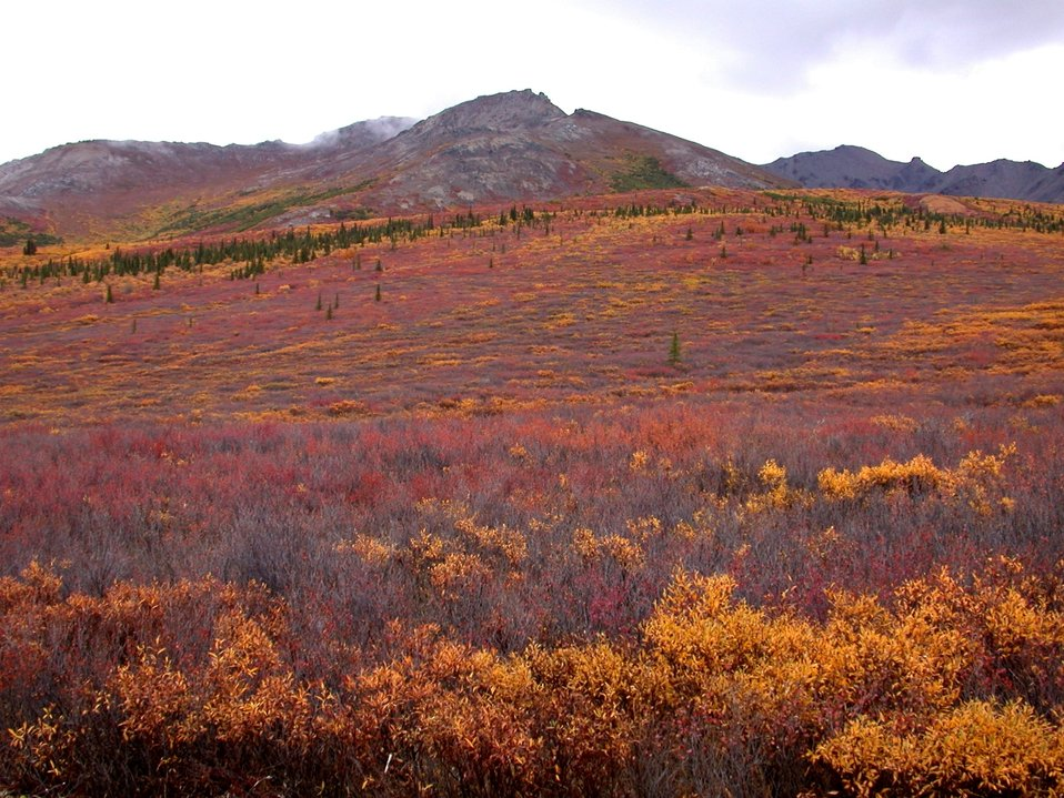Near the tree line at higher elevations with fall colors north of Anchorage.