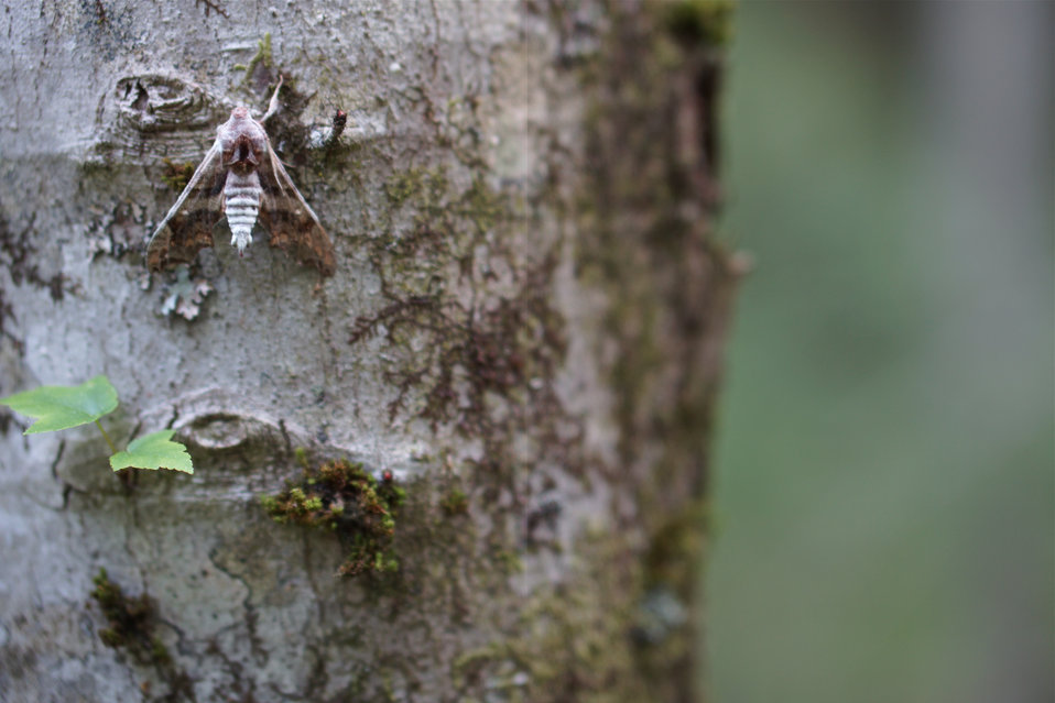 Moth on a tree trunk