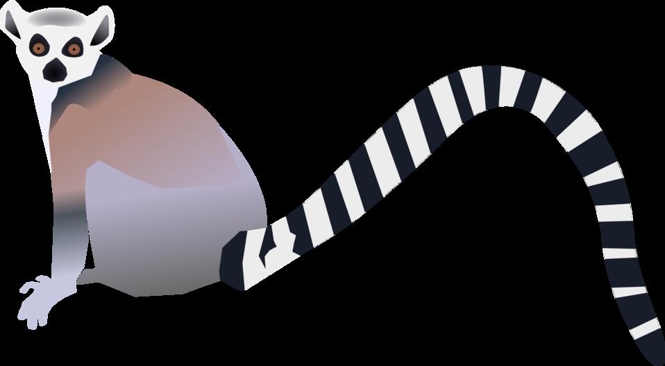 Lemur - Lemurien
