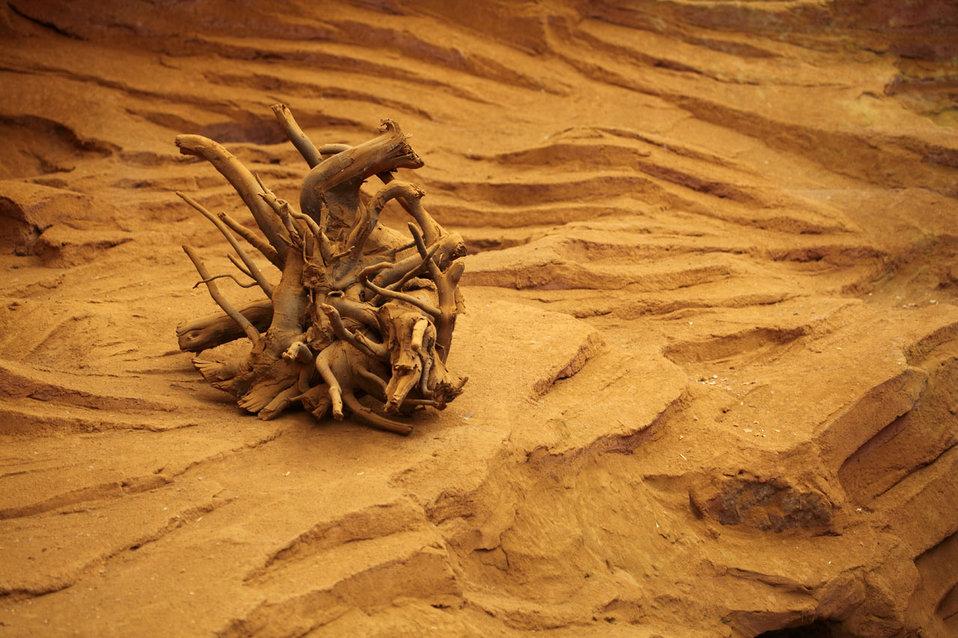Dry tree stump