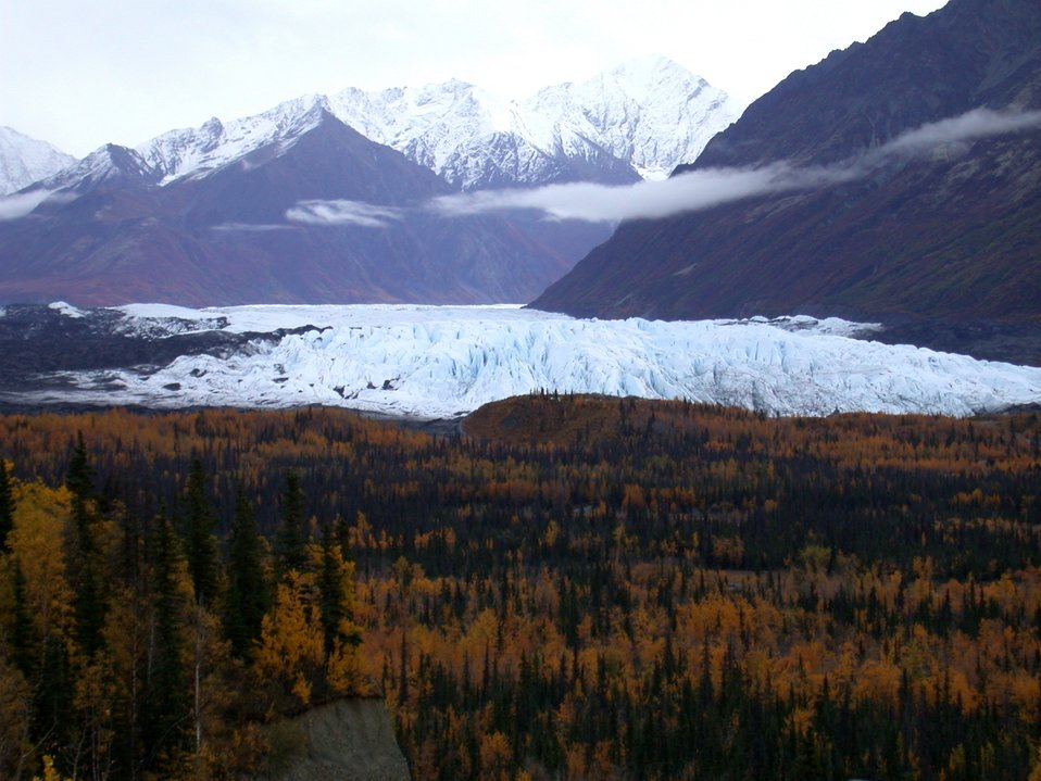 A glacier's front seen over the trees which have established themselves on glacial moraine material.