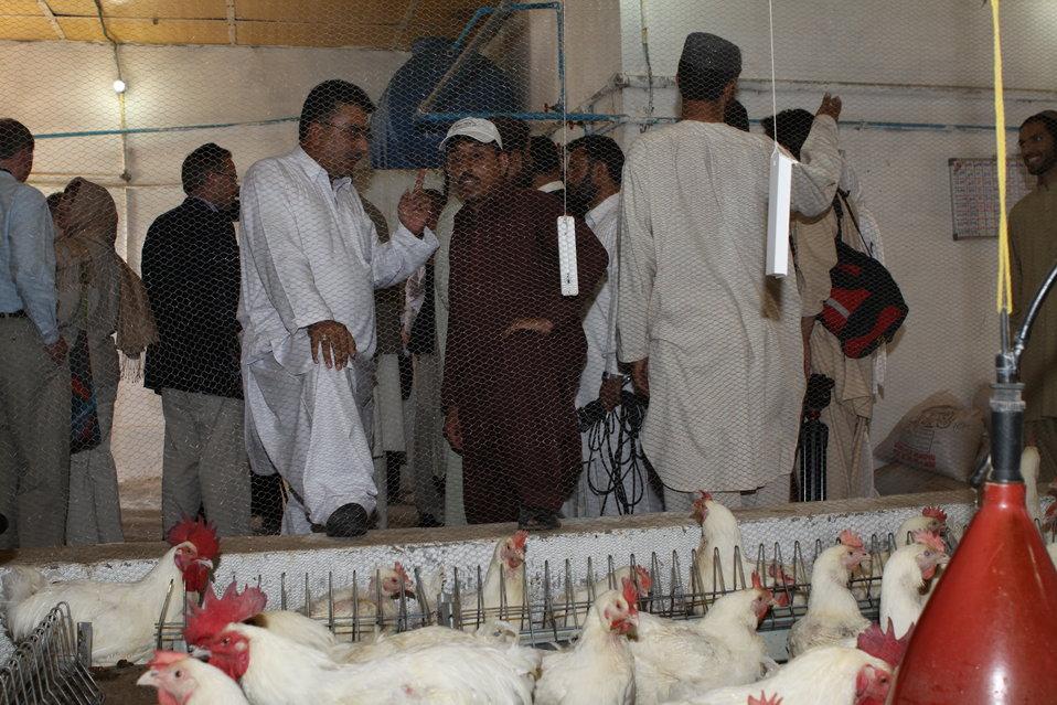Bolan Poultry Farm