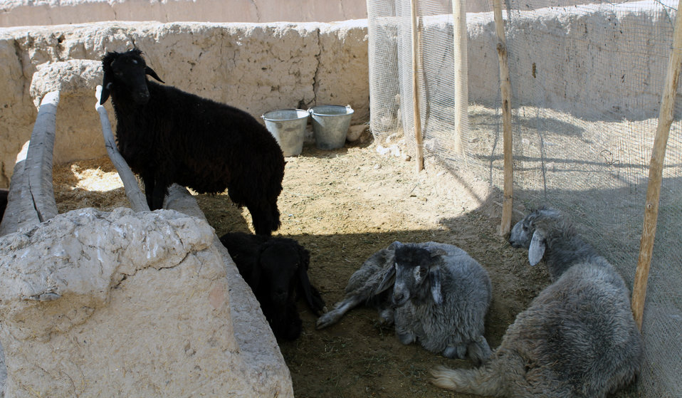 Development of Veterinary...