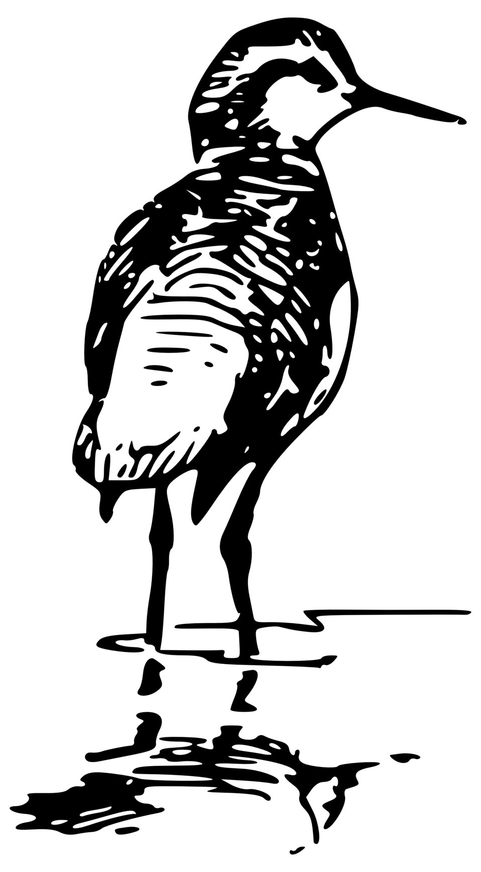 phalarope 2